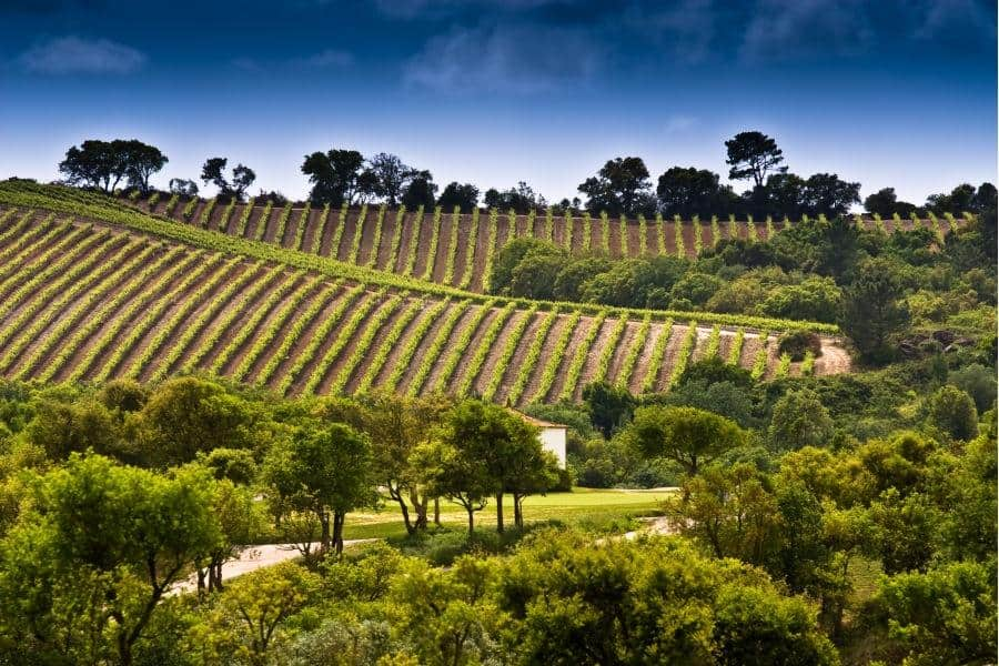 Dolce-Campo-Real-Vineyards