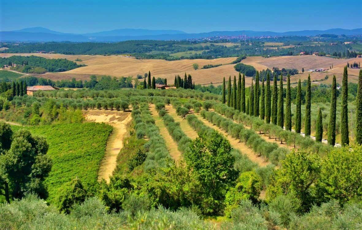 Tuscany-Cypress-Trees-Olive-Trees